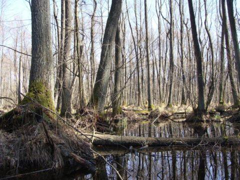 Bagno w Kampinoskim Parku Narodowym