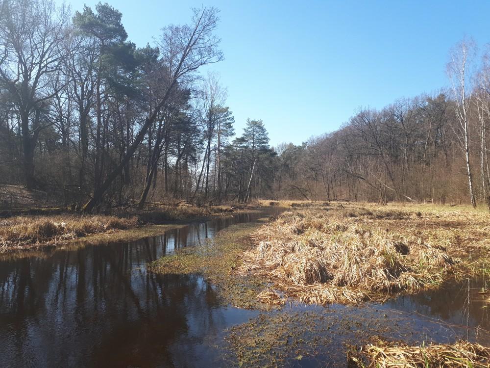 Przełom Kanału Zaborowskiego w Roztoce, Puszcza Kampinoska