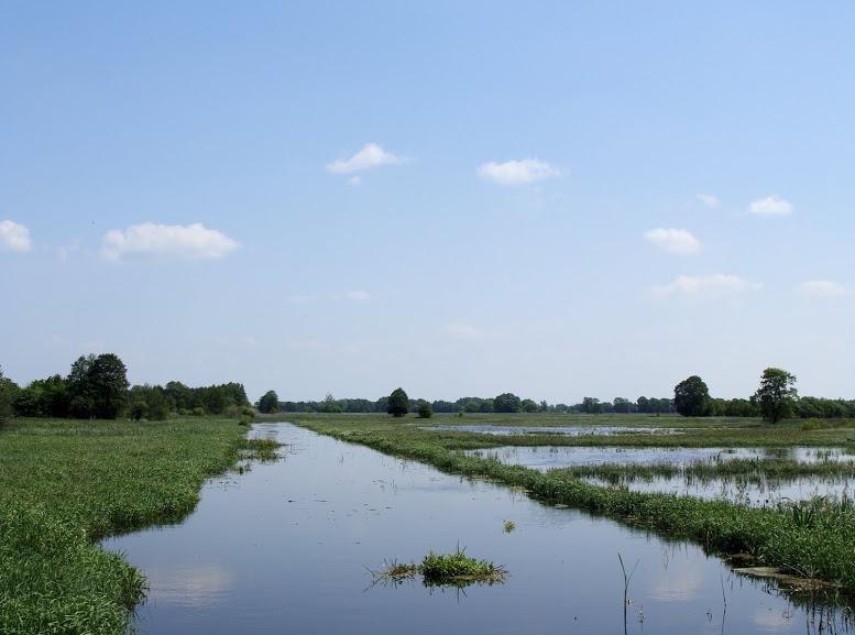 Kanał Łasica i bagna w okolicy Famułek w Puszczy Kampinoskiej
