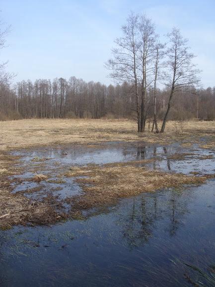 Bagno Paśniki koło Truskawia