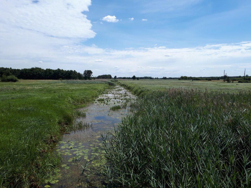 Kanał Łasica w okolicach Famułek