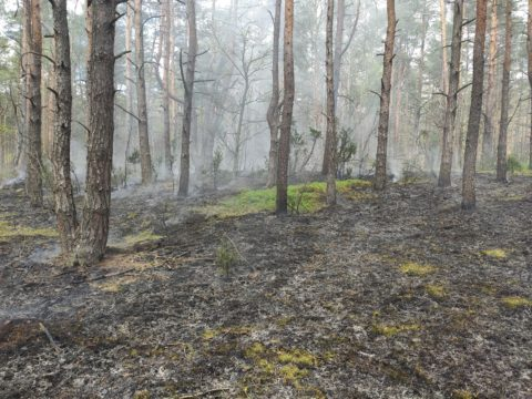 Pożar we wsi Rybitew, gmina Leocin