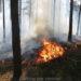 Krajobraz po kampinoskich pożarach